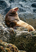 SEA 04 TL0006 01