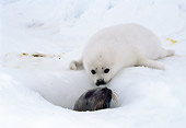 SEA 06 MC0001 01