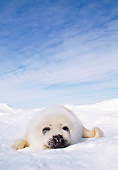 SEA 06 MC0002 01
