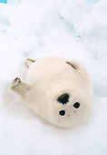 SEA 06 NE0001 01