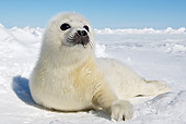 SEA 06 WF0001 01