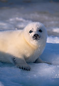 SEA 06 SM0026 01