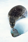 SEA 07 TL0002 01