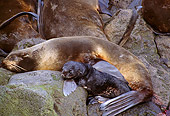 SEA 08 TL0001 01