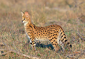 SER 01 MH0001 01