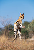 SER 01 MH0004 01