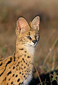SER 01 MH0006 01