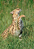 SER 01 RK0040 17