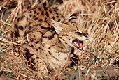SER 01 RK0017 03