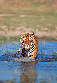 TGR 01 GL0001 01