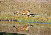 TGR 01 GL0002 01