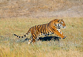 TGR 01 GL0008 01