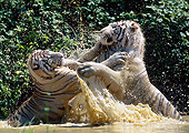 TGR 01 GL0014 01