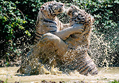 TGR 01 GL0016 01