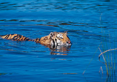 TGR 01 GL0017 01