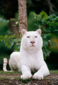 TGR 01 GR0004 01
