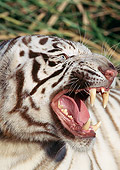 TGR 01 LS0007 01