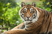 TGR 01 MB0001 01