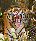 TGR 01 MC0005 01