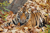 TGR 01 MC0007 01