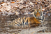 TGR 01 MC0008 01
