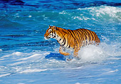 TGR 01 RK0007 05