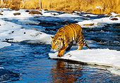 TGR 01 RK0143 03