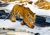 TGR 01 RK0148 07