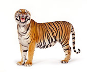 TGR 01 RK0198 05