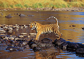 TGR 01 RK0208 02