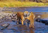 TGR 01 RK0215 12