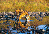 TGR 01 RK0239 02