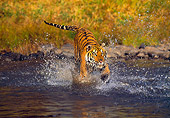 TGR 01 RK0243 05