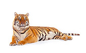 TGR 01 RK0318 03