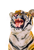 TGR 01 RK0467 03
