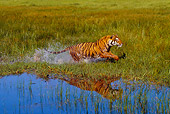 TGR 01 RK0496 31