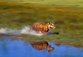 TGR 01 RK0496 35