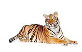 TGR 01 RK0525 21