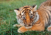 TGR 01 RK0571 07
