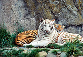 TGR 01 RK0669 01