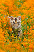 TGR 01 TL0006 01
