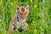 TGR 01 TL0007 01