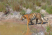 TGR 01 WF0001 01