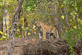TGR 01 WF0002 01