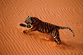 TGR 01 WF0003 01