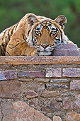 TGR 01 WF0004 01