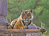 TGR 01 WF0005 01