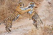 TGR 01 WF0010 01