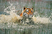 TGR 01 WF0012 01