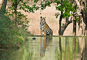 TGR 01 WF0017 01